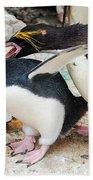 Penguins Beach Towel