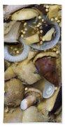 Pickled Mushrooms Beach Towel by Michal Boubin
