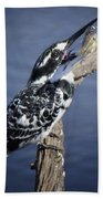 Pied Kingfisher Eating Beach Towel
