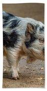Pig With An Attitude Beach Towel