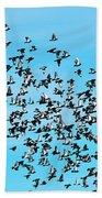 Pigeon Flight Beach Towel