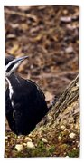 Pileated Woodpecker 3 Beach Towel
