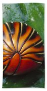 Pill Millipede Glomeris Sp Rolled Beach Towel by Cyril Ruoso