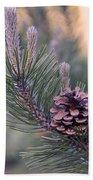 Pine Cone At Sundown Beach Towel