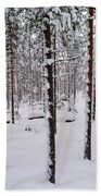 Pine Forest In January Beach Towel