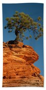 Pine On Rock Beach Towel