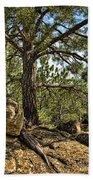 Pine Tree And Rocks Beach Towel