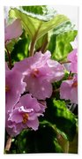 Pink African Violets Beach Towel
