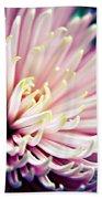 Pink Chrysanthemum Beach Towel
