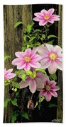 Pink Climatis Flower Beach Towel