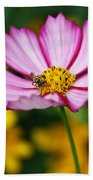 Pink Cosmos Picotee And Bee Beach Towel