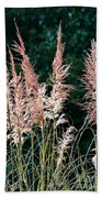 Pink Feathery Reflectors Beach Towel