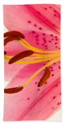 Pink Lily Square Version Beach Towel