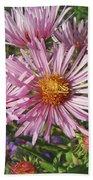 Pink New York Aster- Symphyotrichum Novi-belgii Beach Towel