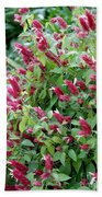 Pink Shrimp Plant Beach Towel