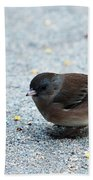 Pink-sided Junco Beach Towel