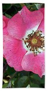 Pink Single Roses Beach Towel