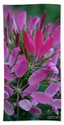 Pink Spider Flower Beach Towel