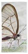 Pink-tipped Clearwing Satyr Cithaerias Beach Towel