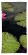 Pink Water Lily I Beach Towel