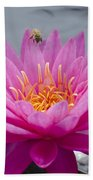 Pink Water Lily Rose Arey With Bee Beach Towel