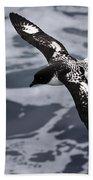 Pintado Petrel - Ancient Mariner Beach Towel