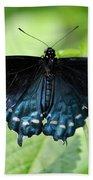 Pipevine Swallowtail Beach Towel