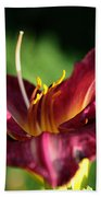Pistons Of The Pink Yellow Lily Beach Towel