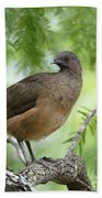 Plain Chachalaca  Beach Towel