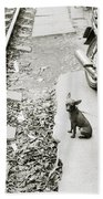 Poignancy Beach Towel