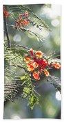 Poinciana Blossoms Close-up V2 Beach Towel