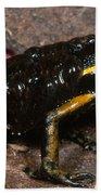 Poison Arrow Frog With Tadpoles Beach Towel