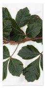 Poison Oak Branch Beach Towel