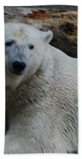 Polar Bear 1 Beach Towel