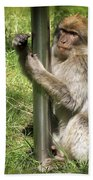Pole Dancing Macaque Style Beach Sheet