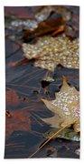 Pond Leaf Dew Drops Beach Towel by LeeAnn McLaneGoetz McLaneGoetzStudioLLCcom