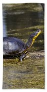 Pond Turtle Basking In The Sun Beach Towel