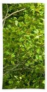 Poplar Tree And Leaves No.368 Beach Towel