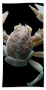 Porcelain Crab Beach Towel