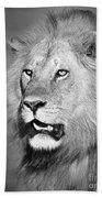 Portrait Of A Lion Beach Towel