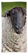 Portrait Of A Sheep Beach Sheet