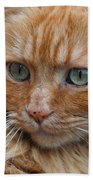 Portrait Of An Orange Kitty Beach Towel