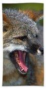 Portrait Of Gray Fox Barking Beach Towel
