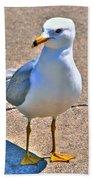 Posing Gull Beach Towel