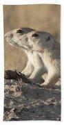 Prairie Dog Pair Grasslands Np Beach Towel
