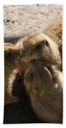 Prairie Dog Gossip Session Beach Towel