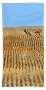 Prairie Pronghorns Beach Towel