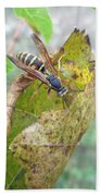 Predatory Wasp Hunts Spider Beach Towel