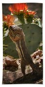 Prickly Lunch  Beach Towel