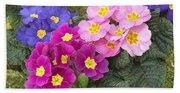 Primrose Primula Sp Flowers Beach Towel